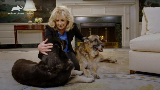 discovery-taps-first-lady-jill-biden-for-puppy-bowl-psa-promoting-mask-wearing