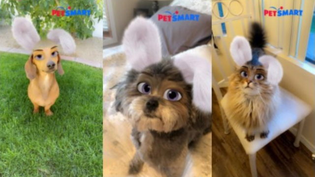 petsmart-turns-to-snapchat-lens-to-dress-up-pets-for-easter