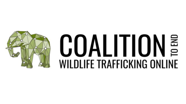 tiktok-joins-coalition-to-end-wildlife-trafficking-online