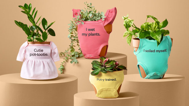 miracle-gro-has-created-cute,-very-kitsch-outfits-for-your-houseplants