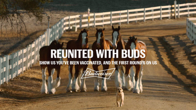 budweiser's-clydesdales-and-puppy-reunite-to-sponsor-your-first-post-vaccine-beer