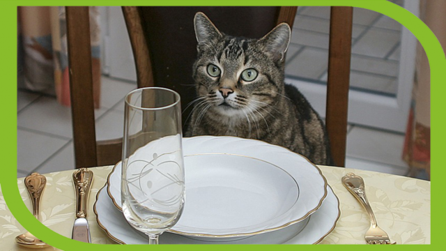 fancy-feast-wants-you-to-eat-like-your-cat