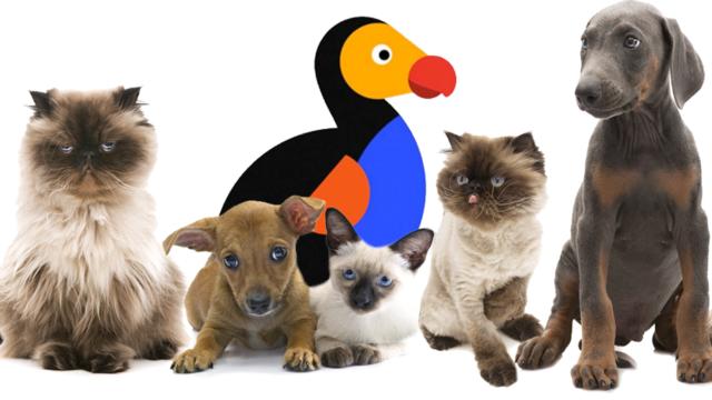 pandemic-pet-boom-drives-group-nine-media's-ad-comeback